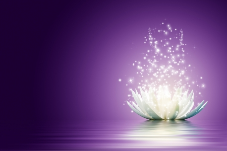 purple lilac: Magic Lotus flower