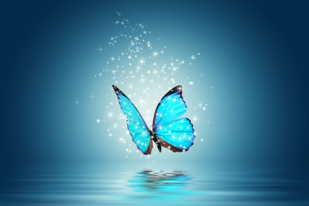 Blue Magic butterfly  over water  photo