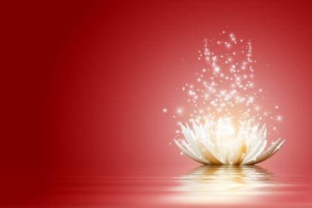 milagro: Magia Flor de loto
