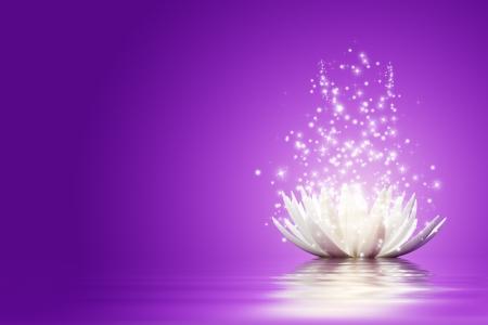 estrellas moradas: Magia Flor de loto