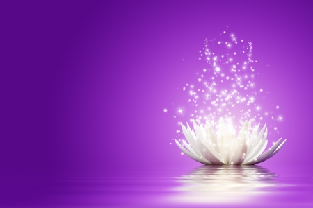 purple stars: Magic Lotus flower