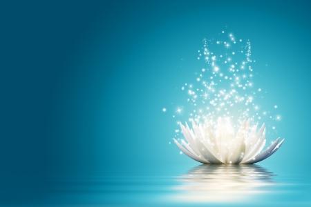 calm: Magic Lotus flower
