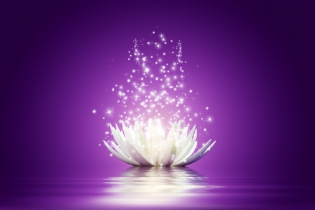 purple lotus: Magic Lotus flower