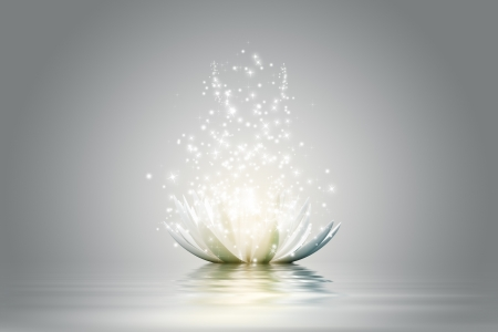 Magic Lotus flower Stock Photo - 15774547