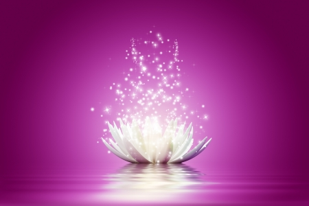 mystery: Magic Lotus flower