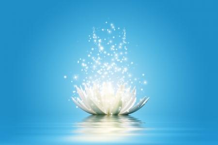 white lotus: Magic Lotus flower