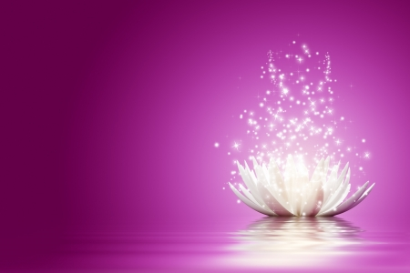 pink lotus: Magic Lotus flower