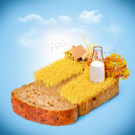 plant seed: Wheat field on the bread