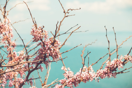 sea flowers: cherry blossom branches