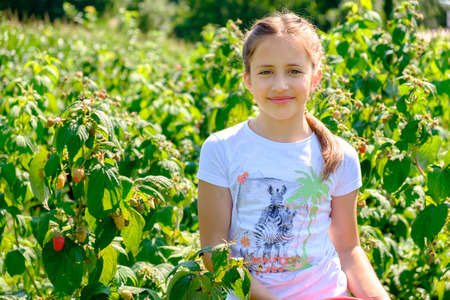 Young girl picking raspberries