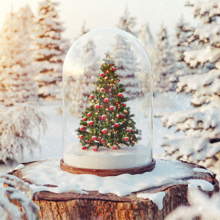 Cute little christmas tree under glass dome in a forest at sunset. Unusual christmas 3d illustration