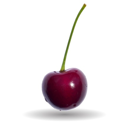berry: Ripe red cherry berry.  Illustration