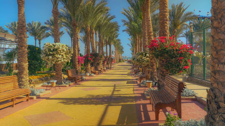 beautiful colored hotel territory. Along the path bench, palm trees and amazing flowering shrubs. Blue sky and view on the sea.