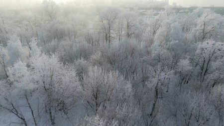 Trees in the snow, span a top view of the sun shines, Stock Photo - 117836221