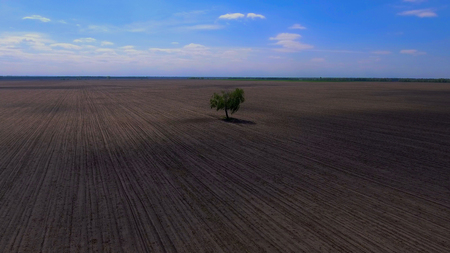 A lonely tree grows in the field. View from above Stock Photo