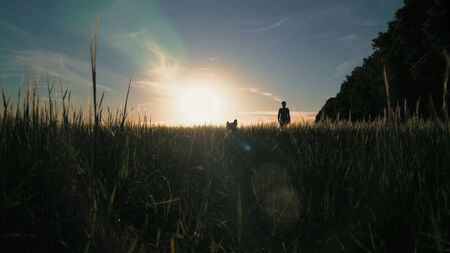 Silhouette woman walking with dog in sunset. breathtaking scenery in countryside field with plant. Female enjoy stroll with pet in summer season with beautiful landscape Archivio Fotografico