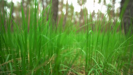 Green grass on the lawn 4k video Stock Photo