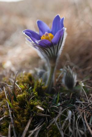 Purple flower on a white grass macro shot