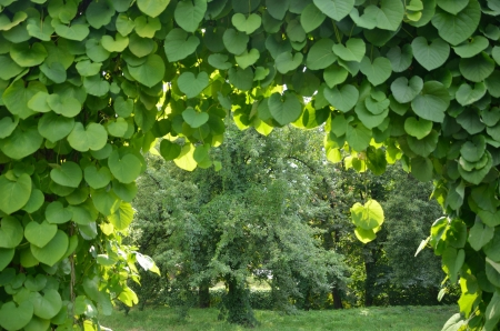 Groene boog in een tuin Stockfoto