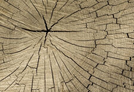 The texture of the old stump. Macro