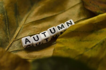Autumn lettering on colorful autumn leaves