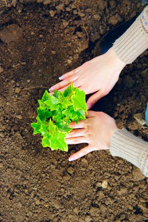 Femme plantant des fleurs dans le jardin Banque d'images - 27847696