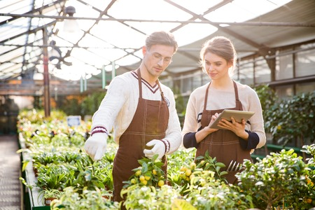 in the greenhouse: Serious male and female gardeners in brown aprons discussing plants and flowers and using tablet in orangery Stock Photo