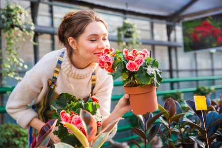 smiling woman in a greenhouse: Attractive cute woman gardener smelling pink flowers in pot with eyes closed in greenhouse