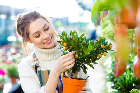 mandarine: Happy beautiful young woman gardener holding small mandarine tree in orange pot in greenhouse