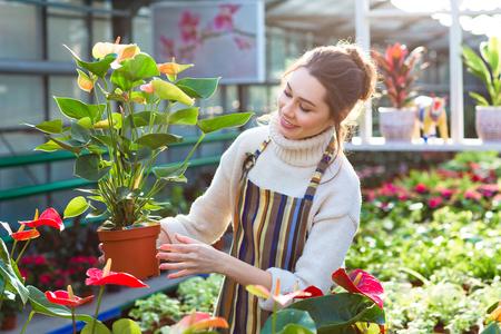 Preciosa jardinero de la mujer joven que elige la olla de la flor feliz con anturios en el centro de jardinería