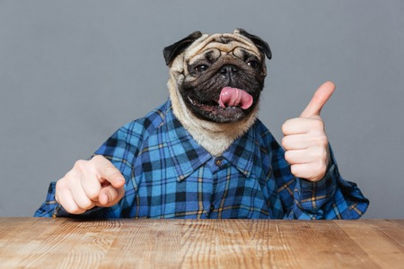 Funny pug dog with man hands in checkered shirt pointing on you and showing thimbs up over grey background