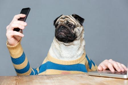 灰色の背景の上にスマート フォンを使用してストライプのセーター手を男と面白いパグ犬 写真素材