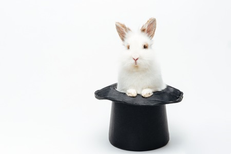 Rabbit in a hat Stock Photo
