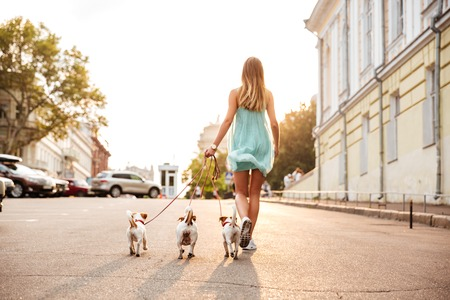 retractable: Back view of a young woman walking her dogs on the city streets
