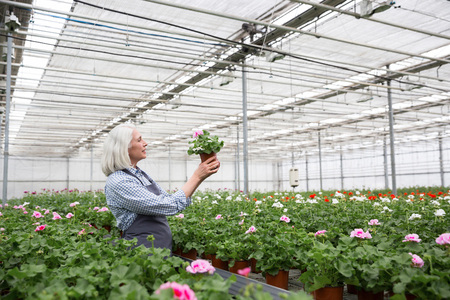 Image of cheerful mature woman standing in greenhouse near plants. Looking aside.