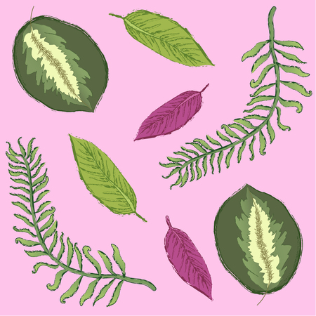 Tropical exotic leaves elements over pink background. Vector illustration