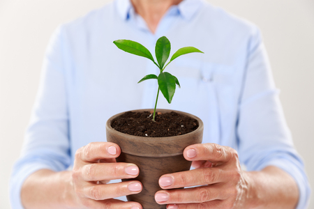 Cropped photo of females hands holding brown pot with young tree, isolated on white background