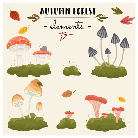 Autumn forest elements. Mushrooms and leaves. Vector illustration