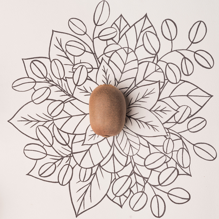 Kiwi over outline floral drawn background Banco de Imagens