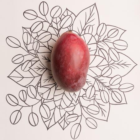 Mango fruit over outline floral hand drawn background Imagens