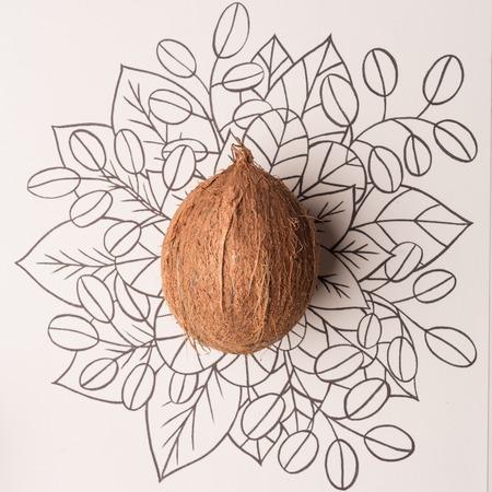 Coconut fruit outline floral hand drawn background