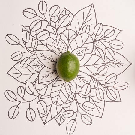 Lime over outline floral hand drawn background Reklamní fotografie - 91707144