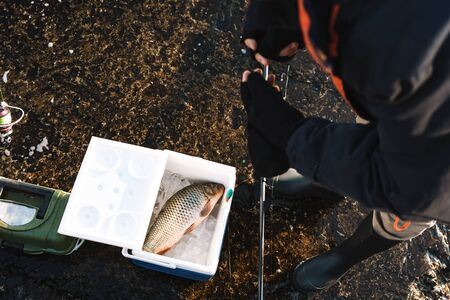 Close up of a fisherman putting caught fish in the cooler
