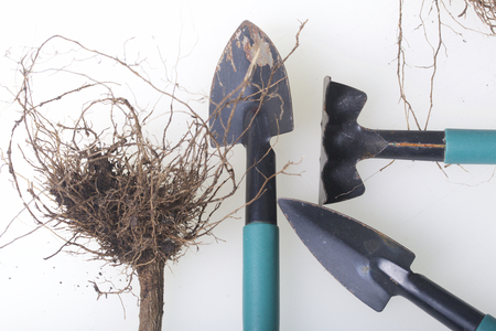 Miniature tools for floriculture. Small shovels and rakes for cultivating the earth in flower pots.