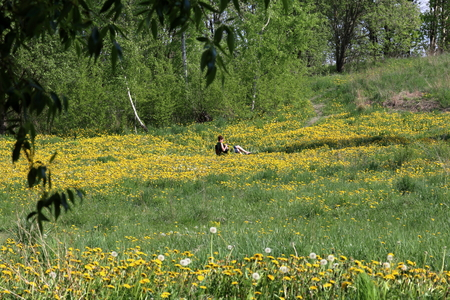 A girl sits in a picnic chair. On a spring meadow with bright green young grass, trees and flowering dandelions.