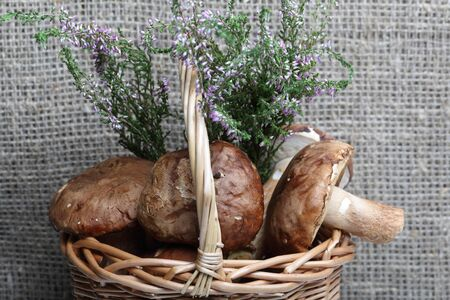 Wicker basket with porcini mushrooms and a bunch of blooming heather. Shot on a background of rough linen cloth.