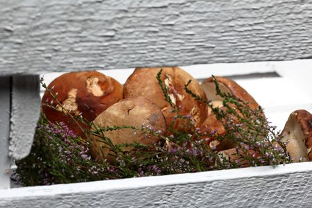 Several porcini mushrooms and a bunch of blooming heather. They lie in a wooden box from white painted boards. Shot through the gap between the boards of the box.