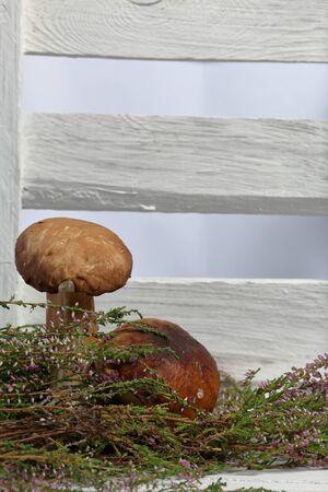 A few fresh porcini mushrooms on a background of white boards. In the background is a bunch of blooming heather and a box of white painted boards. Stok Fotoğraf