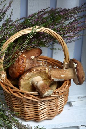 Wicker basket with porcini mushrooms and a bunch of blooming heather. It stands in a wooden box of white painted boards.