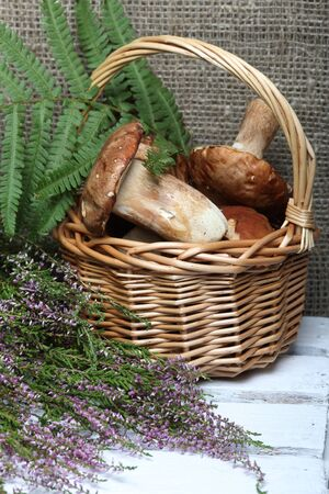 Wicker basket with porcini mushrooms and a bunch of blooming heather. Shot on a background of coarse linen fabric with a sheet of fern. Near a bunch of blooming heather.